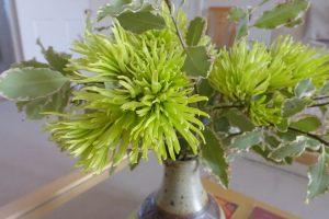 chrysanth-5