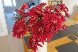 chrysanth-john-riley