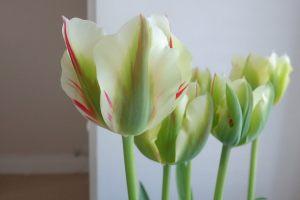 flaming-spring-green